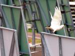 2011-11-22_birds3