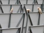 2011-11-22_birds4