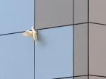 2011-11-22_birds5