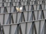 2011-11-22_birds6